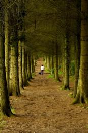 Wandering through Beecraigs