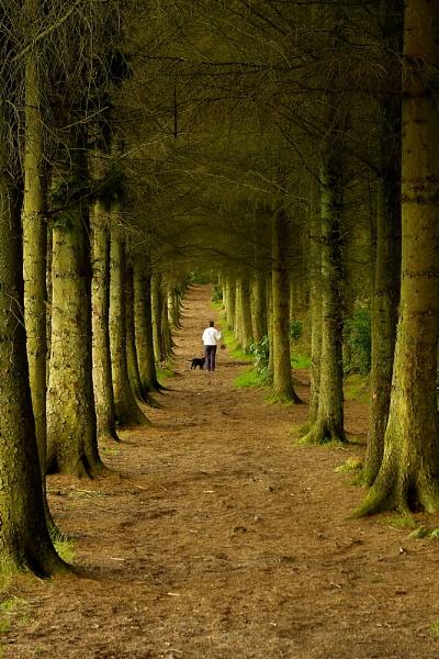 Wandering through Beecraigs by simbastuff