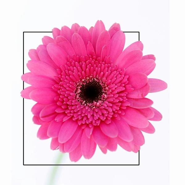 Flower by delboy1145