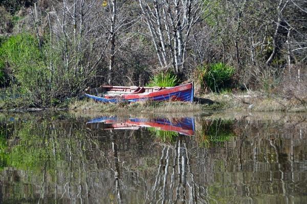 Reflection by kiwi3636
