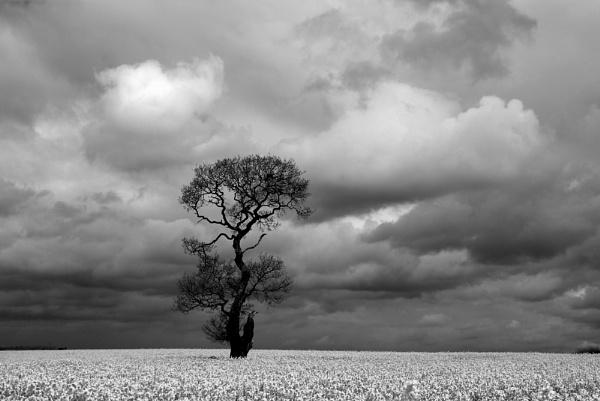 the sky above by soulsharer