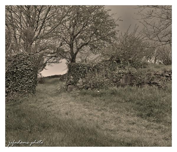 garden path by Doug1