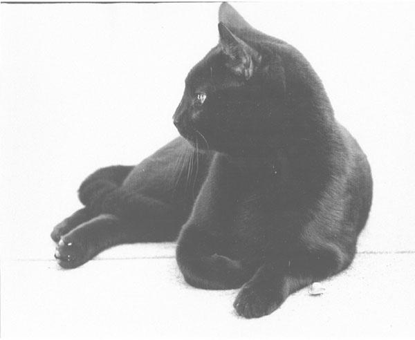 Imperious Feline. by Carlkuntze