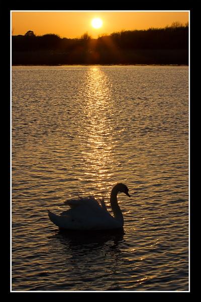 Silhouette Swan by thatmanbrian