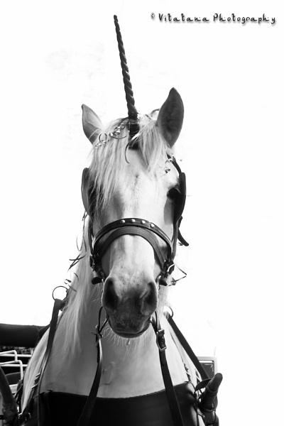 Unicorn by Vitatana