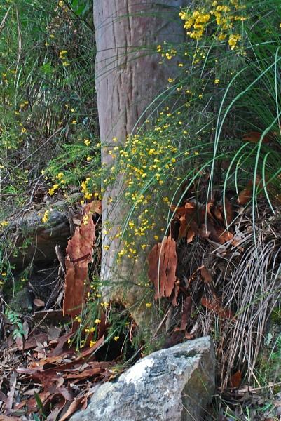 Spring in the bush by Hulme