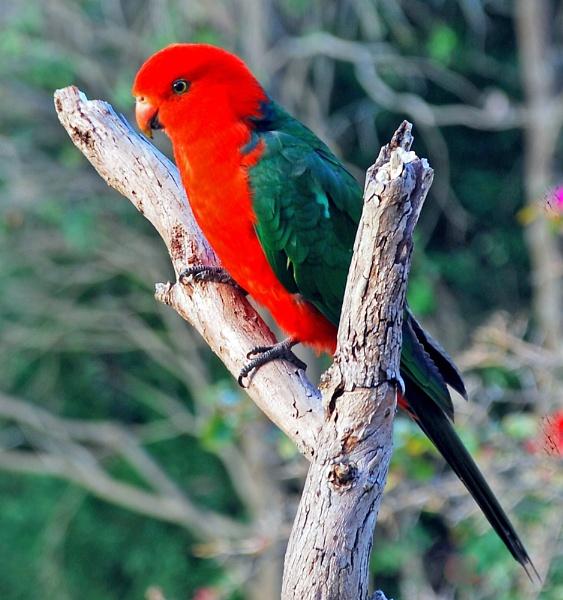 Backyard bird by Hulme