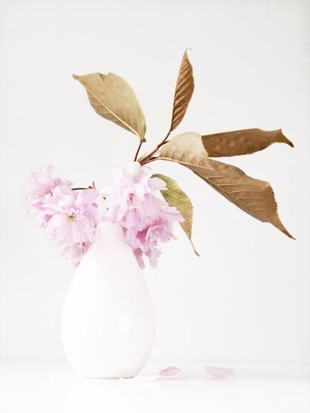 Cherry Blossom by JenniCh