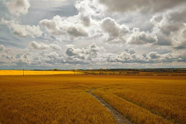 Yellow Fields by danbaker1988