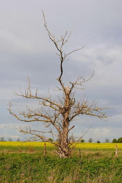 Dead Tree by awmb