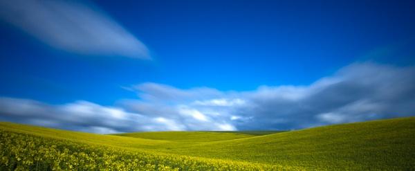 Oilseed Rape by kevspiers