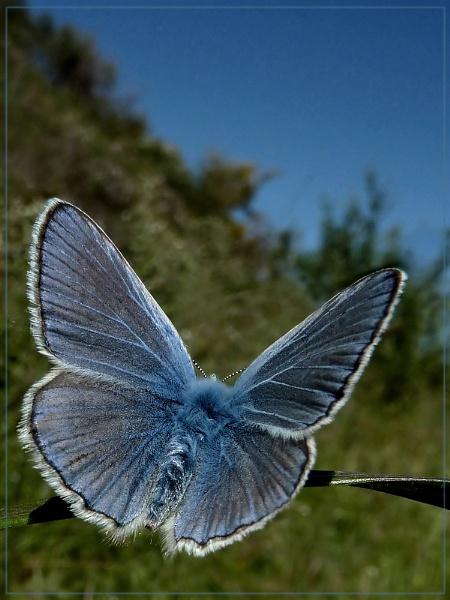 the blue yonder by CarolG