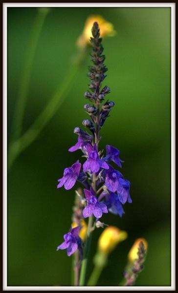 Wild flower by dnwilliams