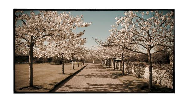 Cherry avenue by ohlavache