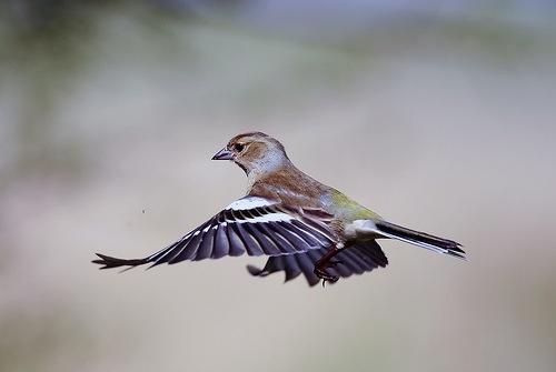 Flying by WalidD300