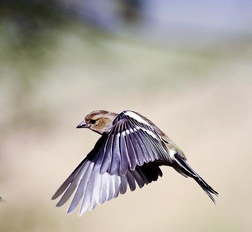Spreading wings by WalidD300