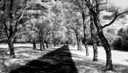 infrared walk in park