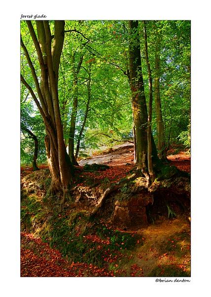 Forest Glade by timecapturer