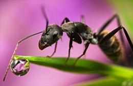 Ant peers into globe