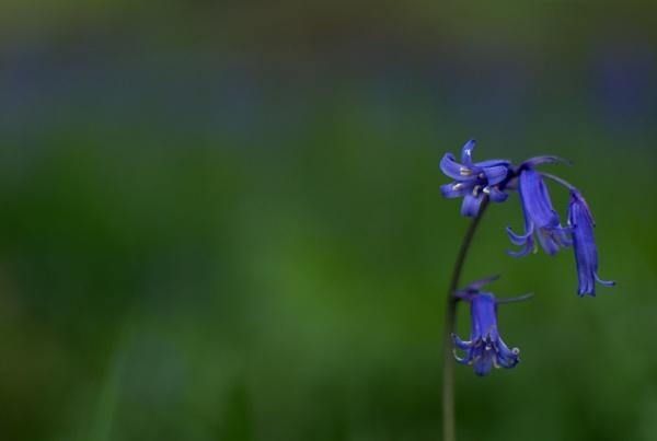 blue blur bell by soulsharer