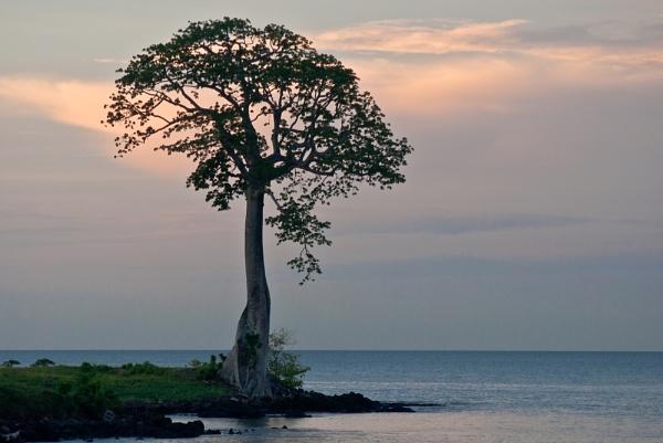 Ceiba by DitoInacio