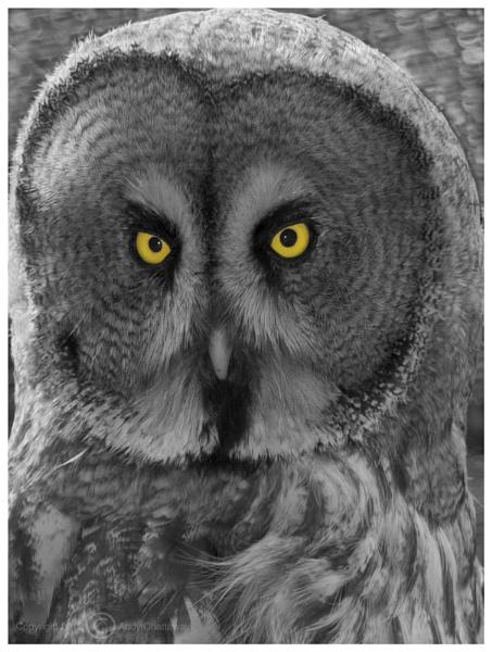 Bight Eyes by andychatt
