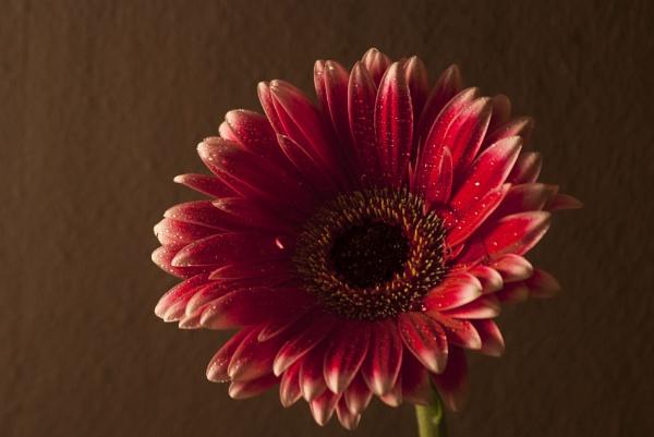 Flower by Ashley102