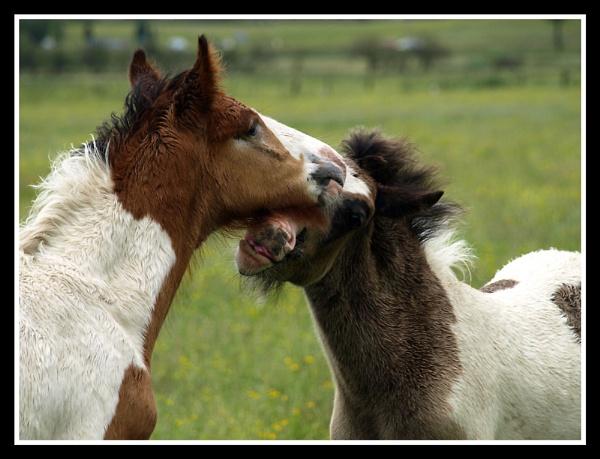 Foals by fificat100