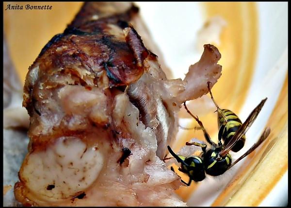 Carnivorous Hornet by nasbonnie