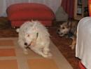 terrier run
