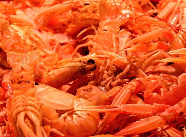 Seafood by brianpatcham