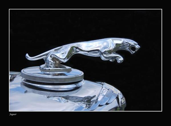 Jaguar by jinglis