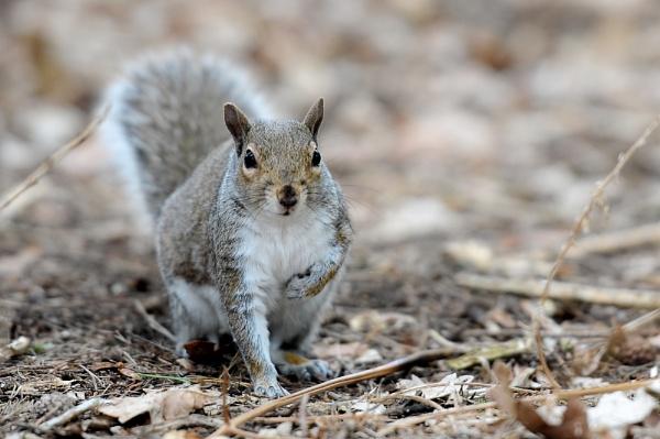 Squirrel No.1 by BigRick