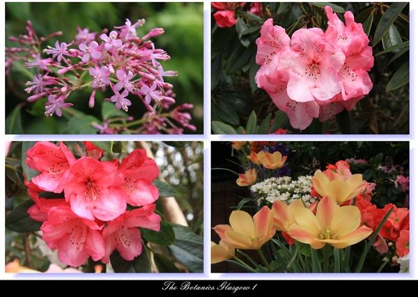 Botanics Series by digital_boi