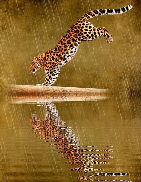 Amur Leopard by iancatch