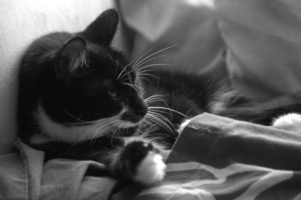 Lazy afternoon by cymroDan