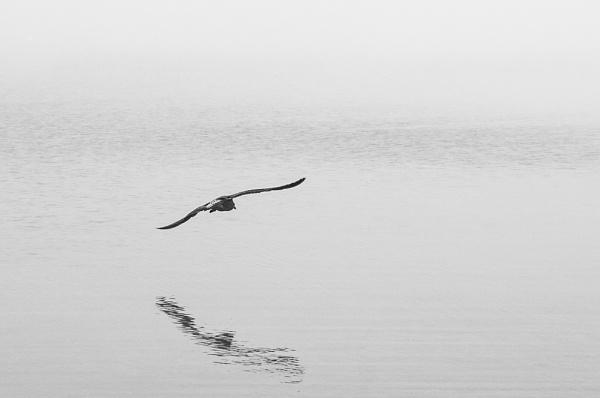 Bird in the fog by possumhead