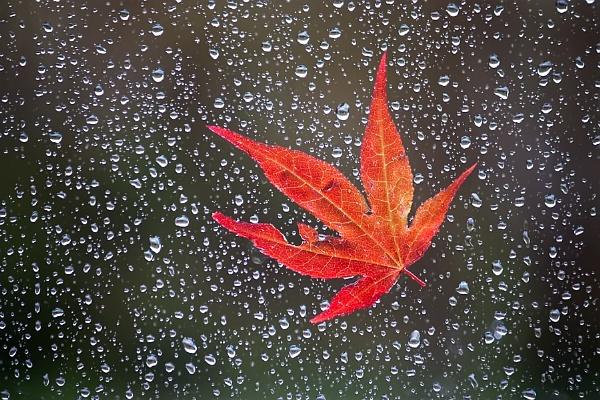 Rainy days by skye1