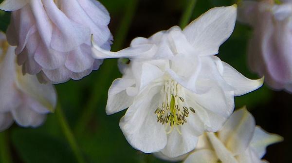 white satin by semismooth