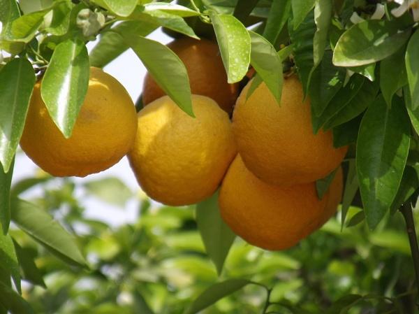 Marrakech Oranges by Wheelers0161