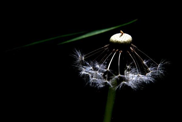 Dim Light by alighalam
