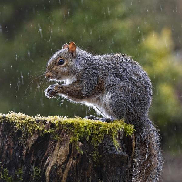 Grey and wet by GrahamDixon