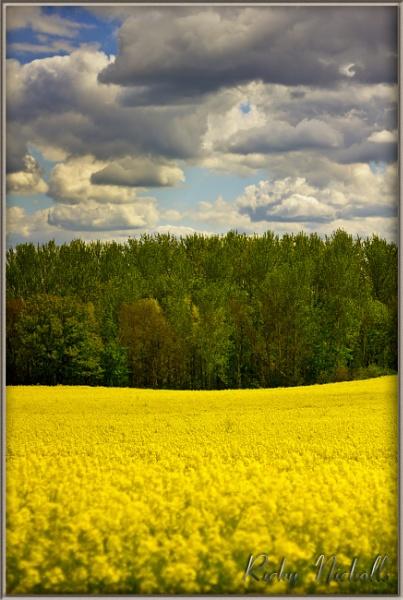Fields of gold by NobbytheNobster