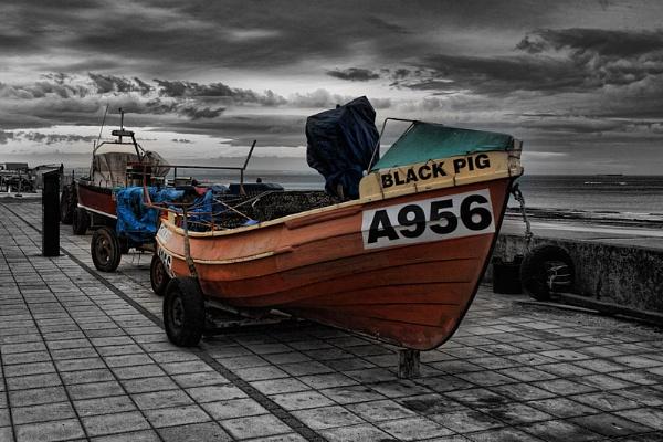 The Black Pig by photodoktor