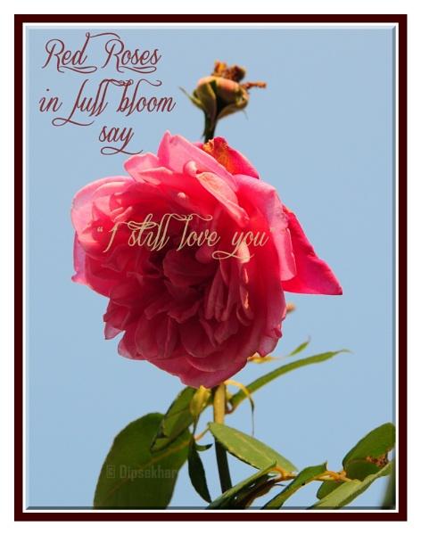 Red Rose by dipsekhar