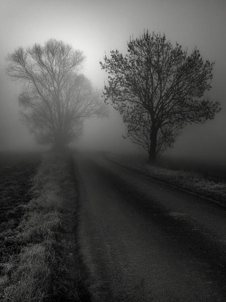 Misty by megpie60