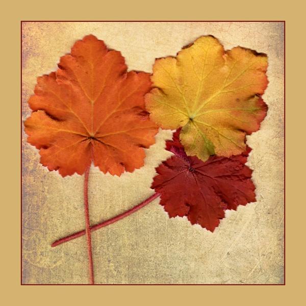 Leaf Scan by Irishkate