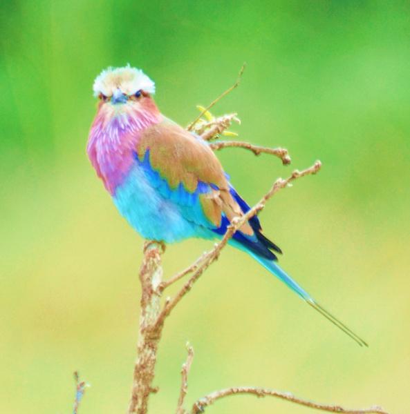 Watch the birdie by Chazzzyb