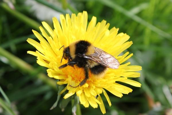 Buzzie Bee by jane914