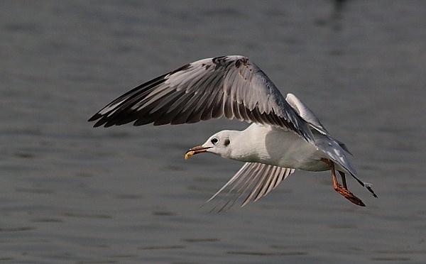 Flying Freeze by bhavya